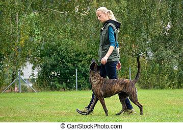 Frau trainiert mit Hund - Hundeausbildnerin beim Training ...