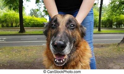 frauen, hände, schraube, ein, alter hund