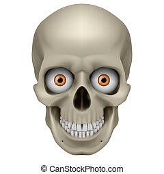 freaky, cráneo humano