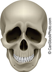 Human Skull - Freaky Human Skull. The emotion of sadness....