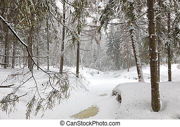 freddo, giorno, in, nevoso, inverno, foresta