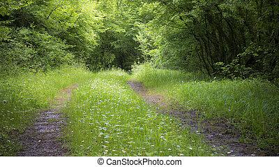 fredlig, skog, väg