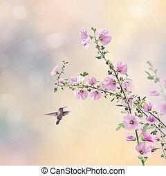 fredonner, fleurs, rose trémière, oiseau