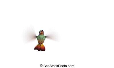 fredonner, quatre, animations, oiseau, 3d