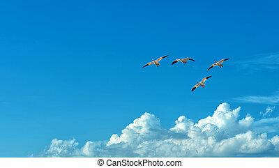 Free flying birds on blue sky background