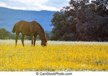 Free horse in a blossom meadow