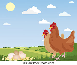 free range eggs - an illustration of two free range chickens...