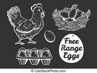 Vector illustration of a free range eggs set. Hen, egg, paper tray, nest. Vintage hand drawn cartoon linotype engraving style.