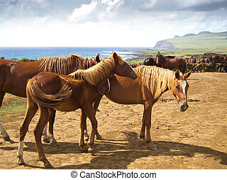 Free Running Horses staring, Easter Island