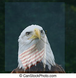 Freedom - Close up of Bald eagle with transparent american...