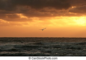 Freedom - Lone bird flying into the sunset over ocean