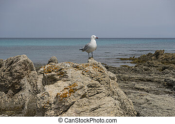 Freedom, Seagull by the mediterranean sea on the island of Mallorca, Spain. Turquoise sea water