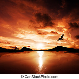 Freedom - A sea bird flies off into the amazing sunset