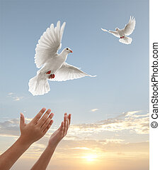 freedom - pair of hands releasing white doves during sunset