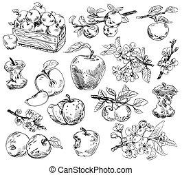 freehand, desenho, maçãs