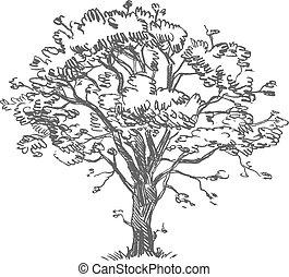 freehand, dessin, arbre