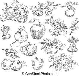 freehand, dessin, pommes
