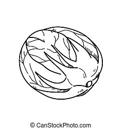 Freehand drawing illustration Cabbage.