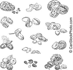 Freehand drawing nuts. Pistachios, cashews, coconut, filbert...