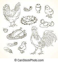 freehand, galinha, desenho, itens