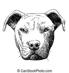 freehand, rys, pies, ilustracja, pitbull