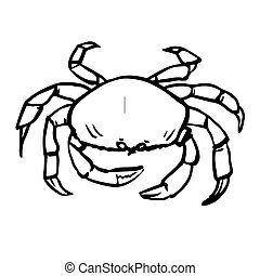 freehand sketch illustration of crab, doodle hand drawn