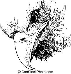Eagle bird doodle hand drawn