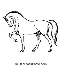freehand sketch illustration of horse, doodle hand drawn