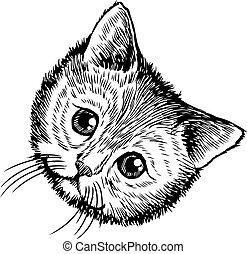 freehand sketch illustration of little cat, kitten, doodle...
