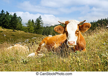 Freely grazing cow on an idyllic mountain pasture