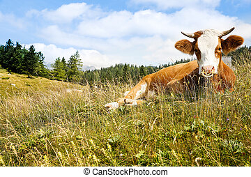 Freely grazing cow on an idyllic pasture