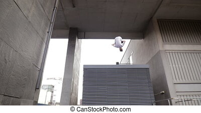 Freerunner on the Rooftops - Freerunner is doing flips from...