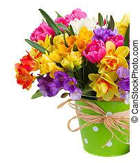 freesia, e, narciso, flores, em, verde, pote