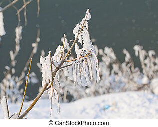 Freeze - Close up of freezed and snowy branch