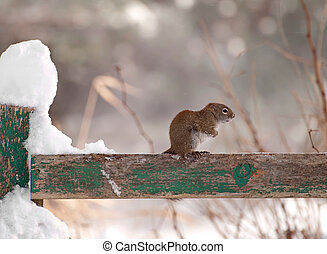 Freezing cold little squirrel. - A little squirrel shivers ...