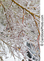 Freezing Rain Ice Storm Coats Plants - Frozen plants covered...