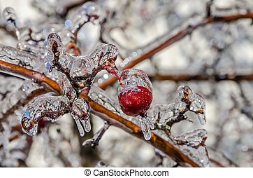 Freezing rain - Twigs of tree encased in ice after a...
