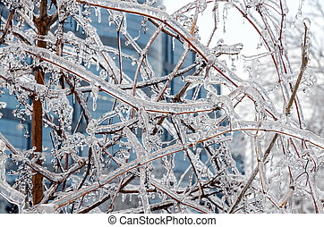 Freezing rain - Twigs of tree encased in ice after a ...