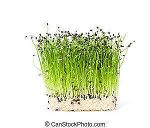 kresse freigestellt salat stockfotos suche foto clipart csp53175095. Black Bedroom Furniture Sets. Home Design Ideas
