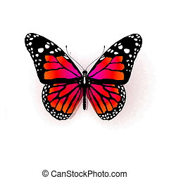 freigestellt, papillon, auf, a, weißes