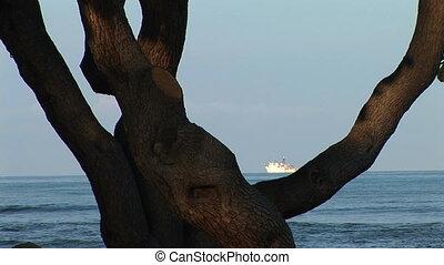 Large ocean freight ship through a tree branch, Big Island, Hawaii