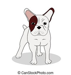 French bulldog design , vector illustration