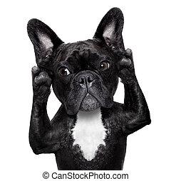 dog listening - french bulldog dog listening carefully what ...