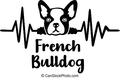 French Bulldog frequency - Heartbeat frequency with French...