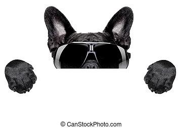 dog hiding - french bulldog hiding behind blank white...