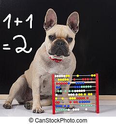 French bulldog in front of a l black board - French bulldog...
