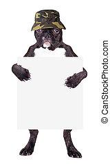 French bulldog Panama hat