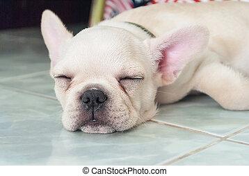 French bulldog puppy sleeping on ceramic floor tiles