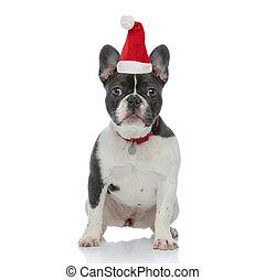 french bulldog puppy wearing santa claus hat