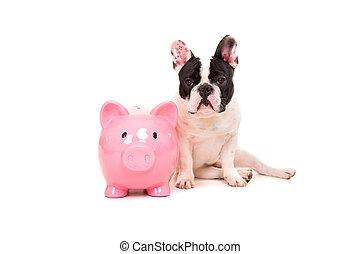 French Bulldog saving money